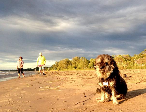 willie-beach-summer-1